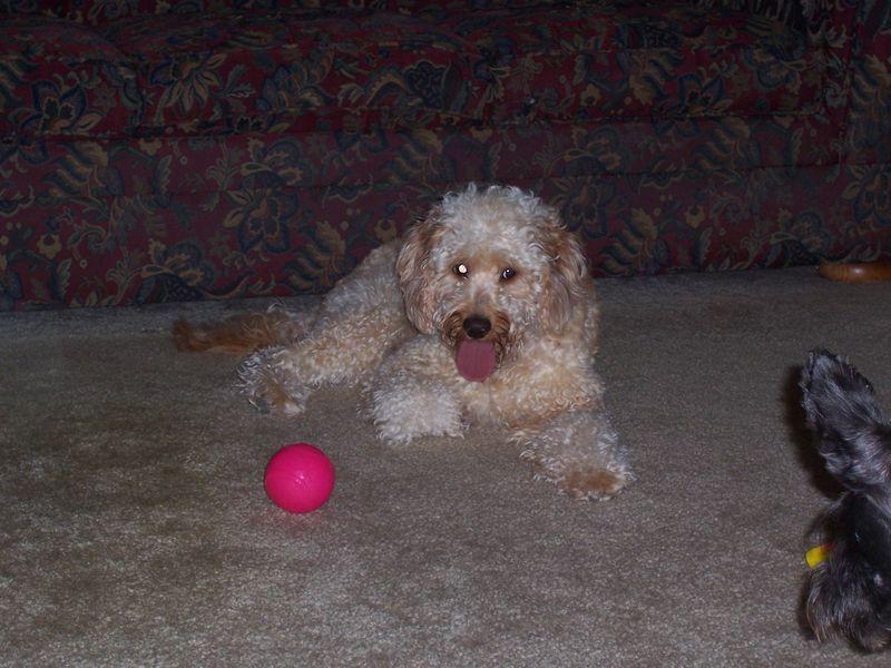 Murphy's Visit Sept 2010 031