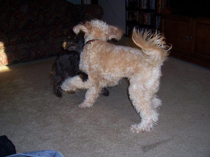 Murphy's Visit Sept 2010 002