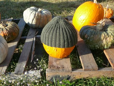 BeanieFor Any Pumpkin