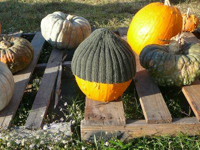 BeanieFor Any Pumpkin