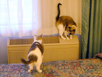 Catssanmarcos1