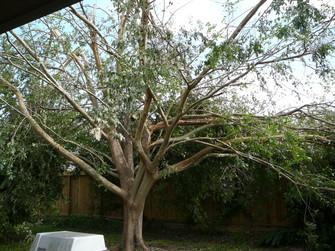 Treepostike